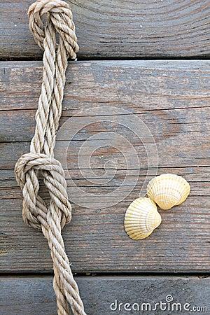Shells and marine rope