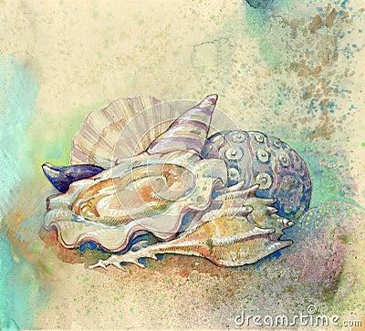 Shells and mollusk