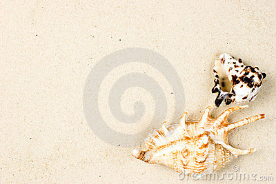 Shells On Sand Stock Photography - Image: 7457372
