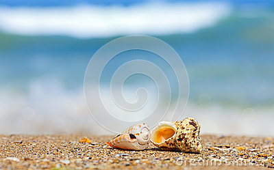 Shells in sand on the sea side