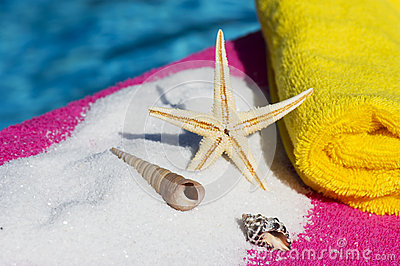 Shells and sea star near water