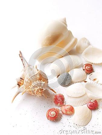 Shells - sea still life