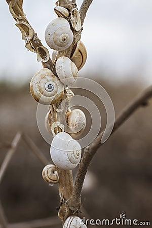 Shells on stick