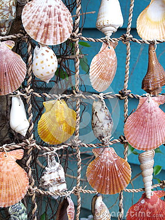 Shells on a String