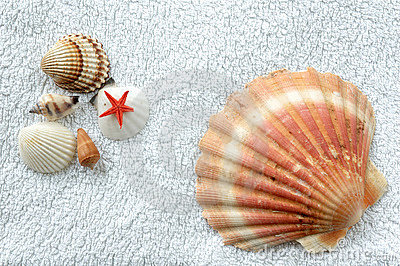 Shells on a towel