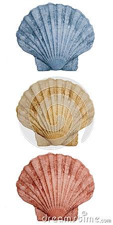 Shells trio