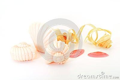 Shells van de zeep