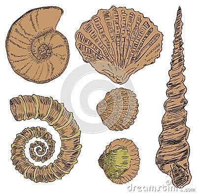 Shells van mariene fauna