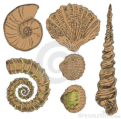 Shells von Marinefauna