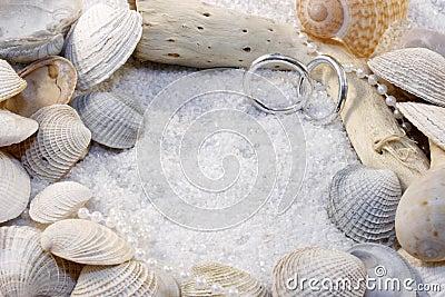 Shells and Wedding Rings