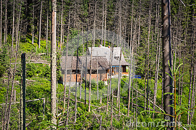 Shelter in the forest of Tatra mountains