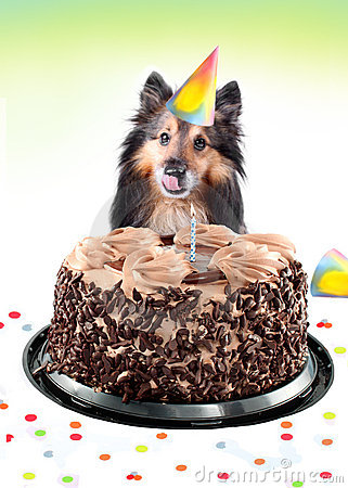 Free Sheltie Birthday Cake Royalty Free Stock Image - 13413856