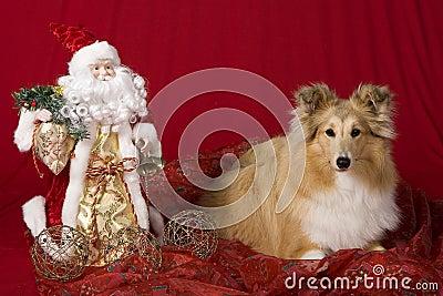 Sheltie Christmas Ornament