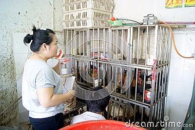 Shenzhen china: the supermarket chicken stalls Editorial Stock Photo