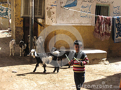 Shepherd boy. Egypt Editorial Photography