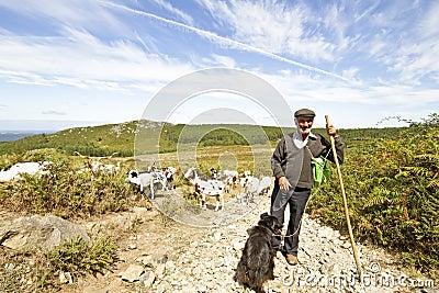 Shepherd in der Landschaft von Portugal
