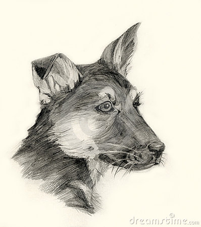 Shepherd dog drawing portrait