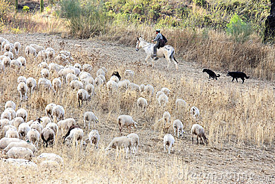 Shepherd on donkey back with dogs in Andalusia Editorial Image