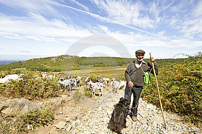 Shepherd en el campo de Portugal
