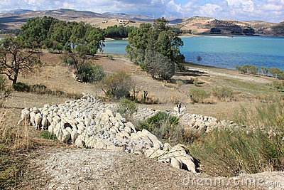 Shepherd witd sheep near lake in Andalusia Editorial Image