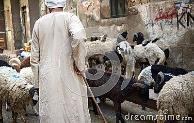 Shepherding in Cairo, Egypt Editorial Image