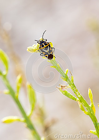 Free Shieldbug On Plant Royalty Free Stock Photo - 28452195