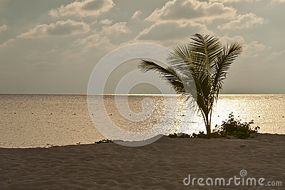 Shimmery Pink Sunset on Sea with Silhouetted Palm on Beach