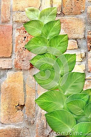 Shingle Plant