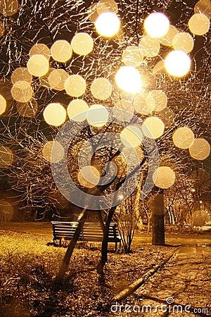 Free Shining Tree Royalty Free Stock Photos - 12768628