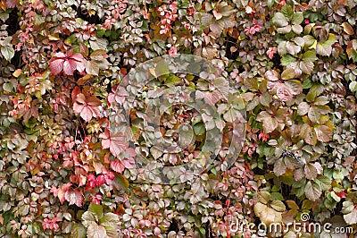 Shiny autumn texture