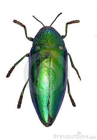 Free Shiny Green Beetle Royalty Free Stock Photography - 153117