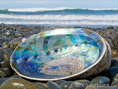 Shiny nacre of Paua shell, Abalone, washed ashore
