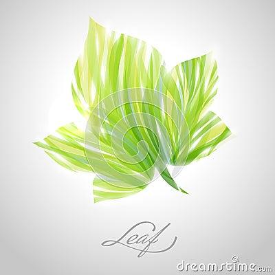 Shiny striped maple leaf. Vector illustration.