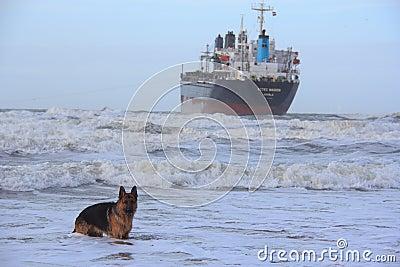 Ship stranded in Wijk aan Zee, The Netherlands Editorial Photography
