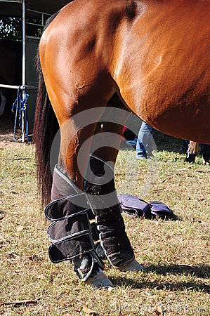 Shipping Boot for Equine
