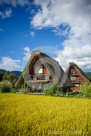 Shirakawa village harvest season Editorial Photography