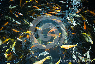 Goldfish stock photo image 46016361 for Surface fish ponds