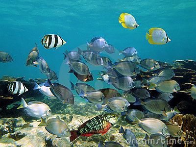 Shoal of tropical fish in a coral reef