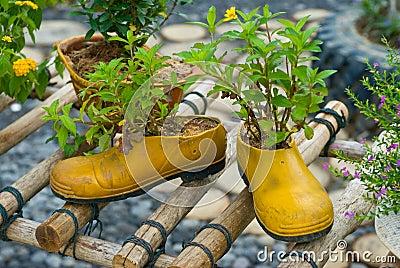 Shoe flowerpot