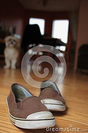 Shoe Killer