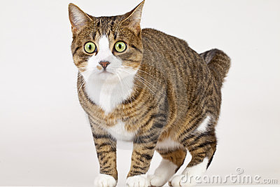 Shoked cat