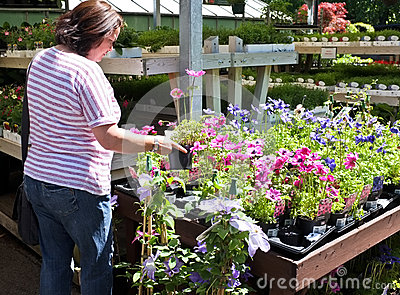 Shopping for Garden Flowers