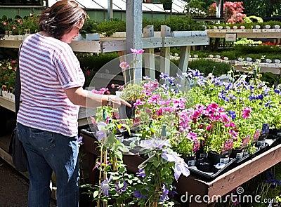 Shopping for Garden Flowers