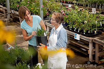 Shopping for House Plant