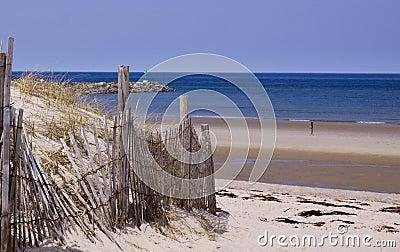 Shore of Cape Cod