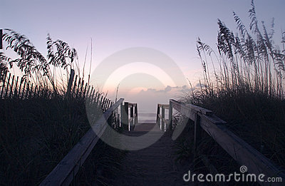 The Shore Dunes #1 Stock Photo