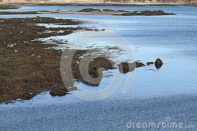 Shoreline Banks at Low Tide