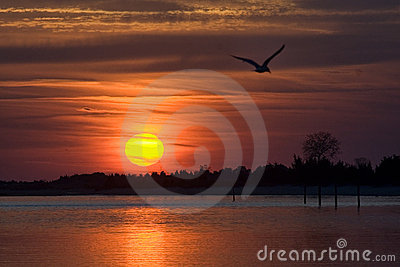 Shoreline with bird flying at sunset