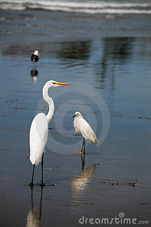 Free Shoreline Birds Royalty Free Stock Photos - 12089598