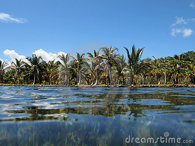 Shoreline with coconut trees